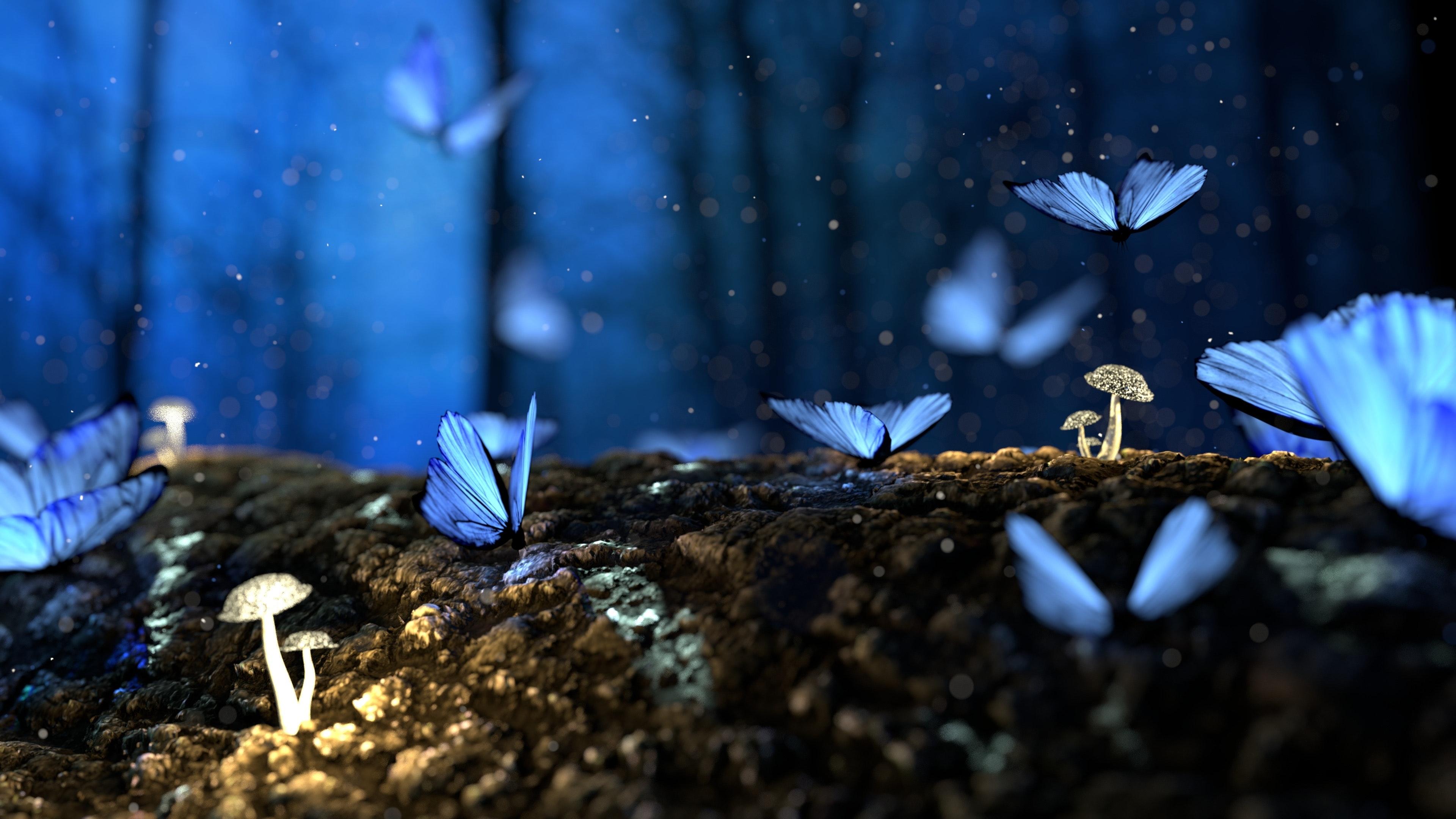 Fjärilar, svampar, skog.