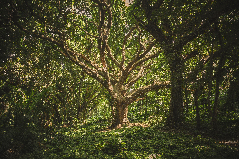 Grönskande, tät skog.